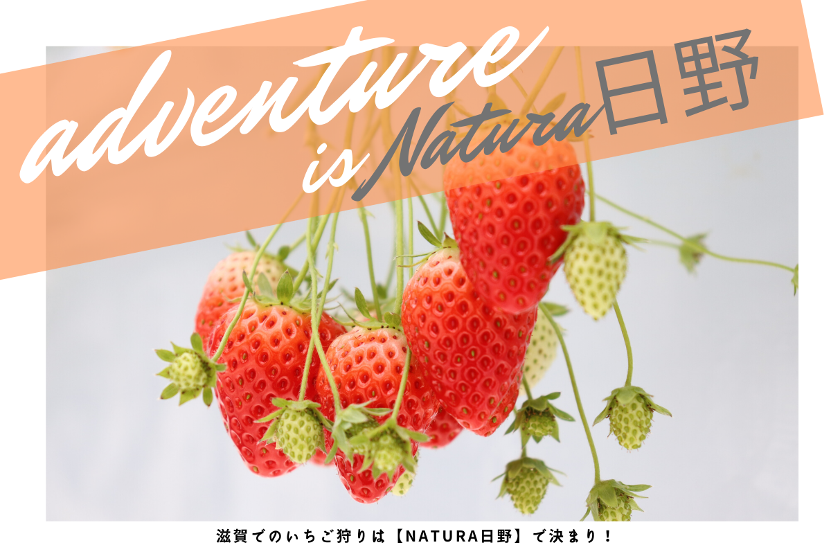 【いちご狩り】Natura日野でいちご狩り体験をオススメする4つの理由【滋賀県】